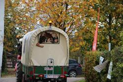 Click to view album: Apfelfest 19.10.2014